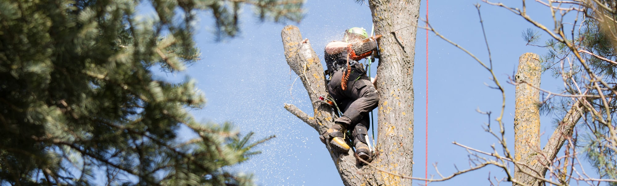 tree service worker in a tree